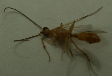 白蚁咬了的症状 跳蚤咬的症状图片 白蚁怎么消灭 白蚁怎么治图片